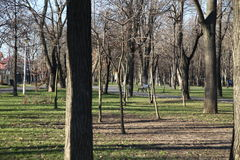 Trees in a parc. Trees in Parc Bazilescu in Bucharest in late autumn royalty free stock images