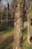 Trees in a parc. Trees in Parc Bazilescu in Bucharest in late autumn stock photography