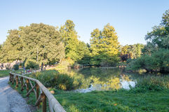 Trees of Parco Sempione in Milan, Italy.  Stock Image