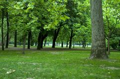 Trees in park 1 royalty free stock photography