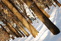 Trees in a park Stock Photography