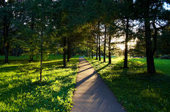 Trees in the park. In sun rays Stock Photos