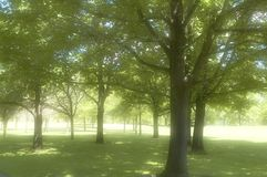 Trees in a Park royalty free stock image