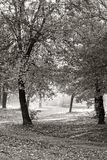 Trees in a park. In Autumn Stock Images