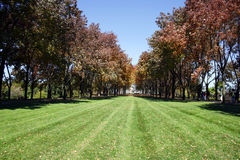 Trees in a Park Royalty Free Stock Photography
