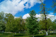 Trees in a park. Larches, apple-trees in city park against the dark blue sky with clouds royalty free stock photos