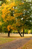 Trees in the park. In autumn stock photos