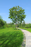 Trees in the park. Royalty Free Stock Photo