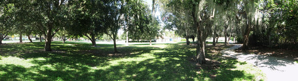 Trees in park. Panorama of trees in parks with light peeking through branches and shadows on ground Royalty Free Stock Photography