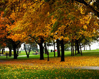 Trees at the park. Trees and leaves at the park stock photos