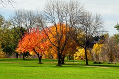 Trees at a park. Trees and leaves at the park during fall Royalty Free Stock Images