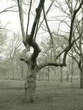 Trees in park. Sepia view of bare branched trees in Central Park, New York City, U.S.A royalty free stock image
