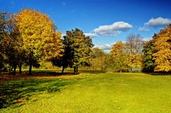 Trees in the park Stock Image