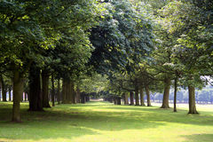 Trees in park Royalty Free Stock Photo