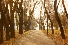 Trees in the park in autumn. Autumn urban landscape. Alley in a city park royalty free stock images