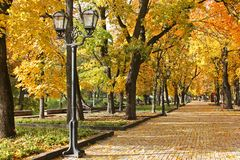 Trees in the park in autumn. Autumn urban landscape. royalty free stock photography