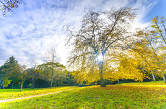 Trees in a park in autumn Royalty Free Stock Images