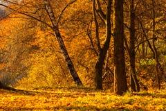 Autumn park yellow foliage Stock Photos