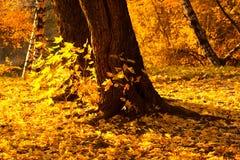 Autumn park yellow foliage Stock Photo