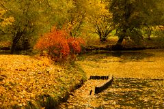 Autumn park pond trees Stock Image