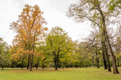 Trees in the park in autumn. Orange, yellow and green trees in the park in autumn Royalty Free Stock Photography