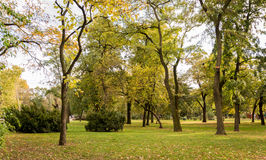 Trees in the park in autumn. Yellow and green trees in the park in autumn Stock Images
