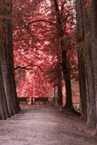 Trees of the park avenue. A trees of the park avenue royalty free stock photo