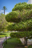Trees in the park , beautiful park trees , formal garden Royalty Free Stock Photography