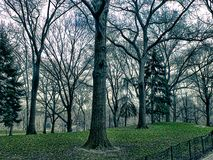 Trees in  a park. Trees in central park in new york Royalty Free Stock Photography
