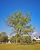 Trees of a park in the chandigarh city india Royalty Free Stock Photos