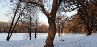 Trees in a park on a cold winter day. Look on a trees in a park on ice cold winter day, Sremska Kamenica, Serbia stock photography