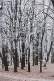 Trees in park covered with frost Royalty Free Stock Photos
