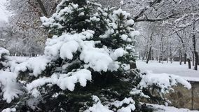 Trees in the park covered with snow, day stock video