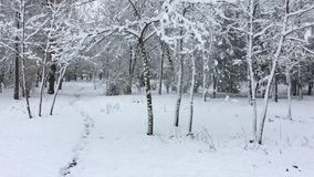 Trees in the park covered with snow stock footage