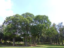 Trees on park. Trees in a park in Delhi Stock Photo