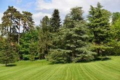 Trees in a park Royalty Free Stock Photo