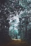 Trees in park. Trees in park in evening royalty free stock photography