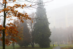 Trees in a park on a foggy autumn morning with bright orange colors and appartment buildings in the background Stock Photo