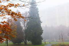 Trees in a park on a foggy autumn morning with bright orange colors and appartment buildings in the background Royalty Free Stock Image