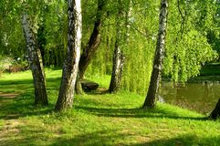 Trees in the park. A great place for resting Stock Image