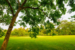 Trees in a park with green lawn Stock Images