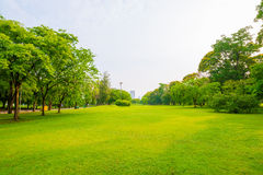 Trees in a park with green lawn Royalty Free Stock Photography