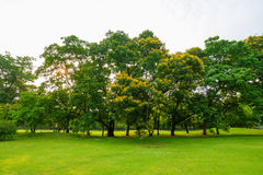 Trees in a park with green lawn Stock Image