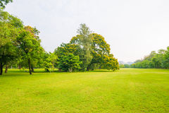 Trees in a park with green lawn Royalty Free Stock Photos