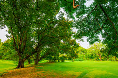 Trees in a park with green lawn Stock Photo
