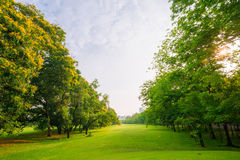 Trees in a park with green lawn Royalty Free Stock Images