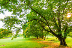 Trees in a park with green lawn Stock Photos