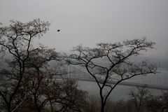 Trees on park hill with river bridge and buildings silhouettes royalty free stock image