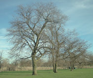 Trees in the Park. Leafless Trees in the park in early spring Royalty Free Stock Photo