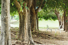 Trees in park Stock Image